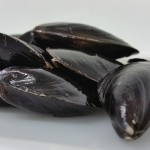 Prince Edwards Island Mussels