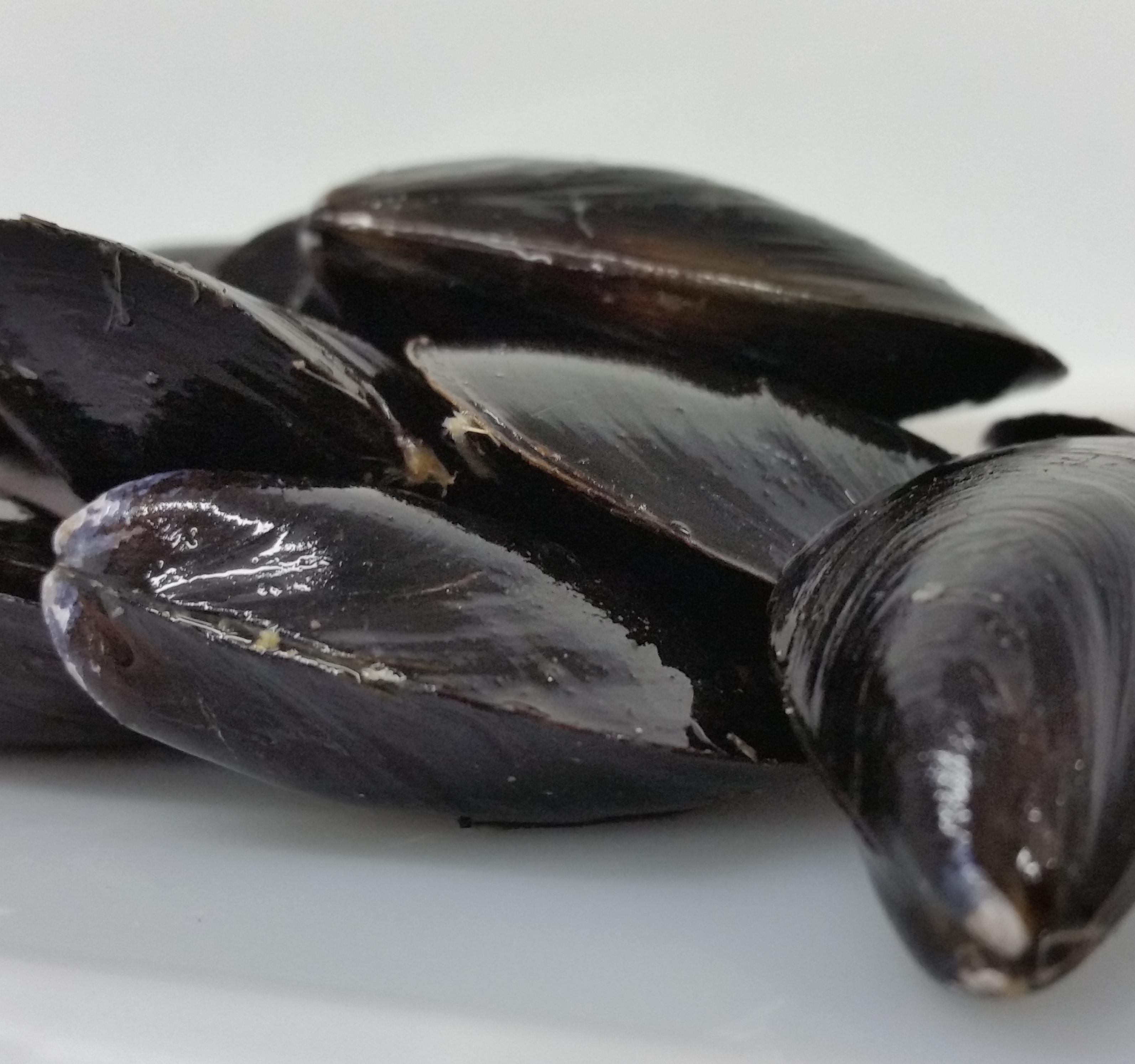 Jordan Brothers P.E.I Mussels